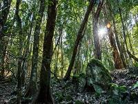 Dry rainforest hidden treasuree track