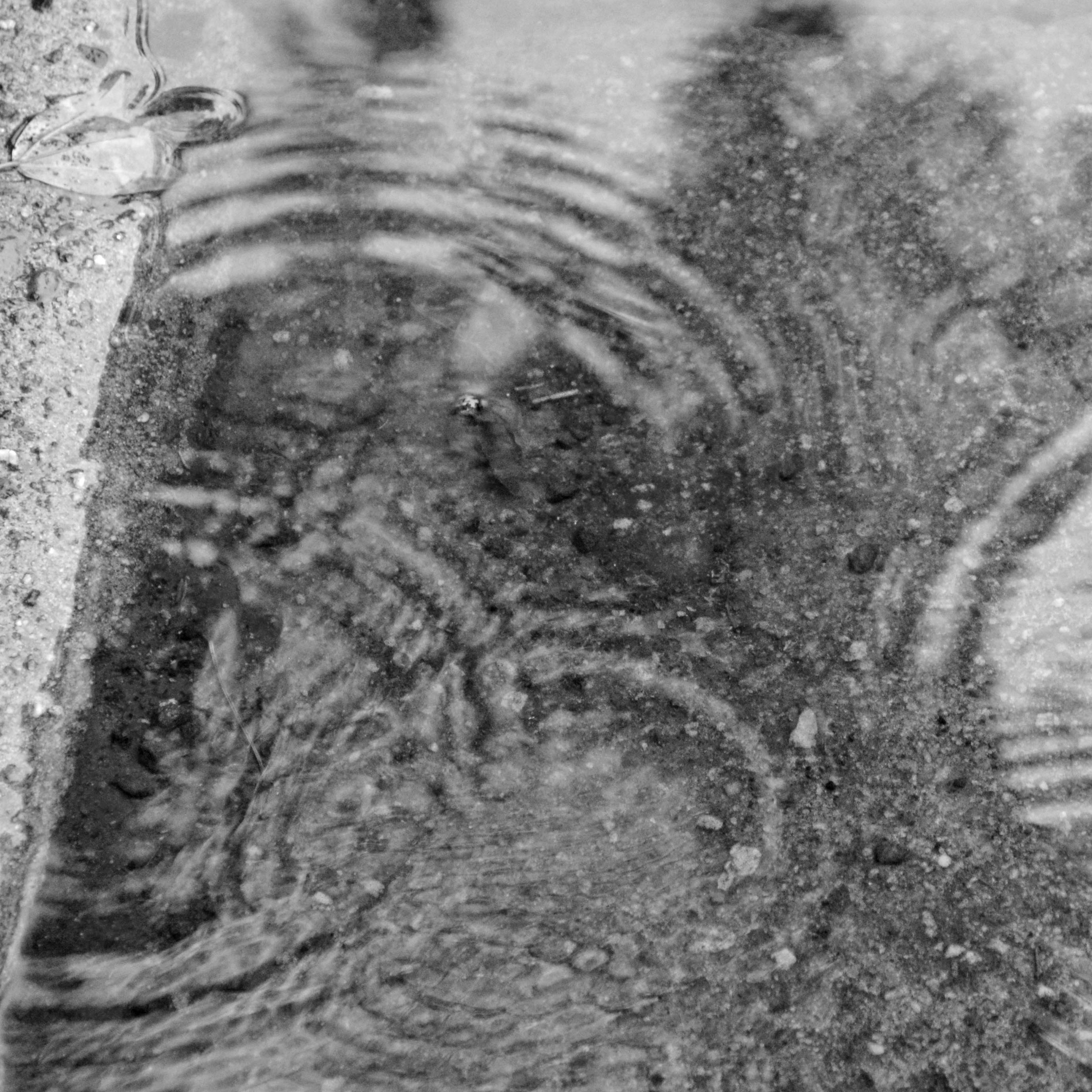 Puddle with ripples b   w