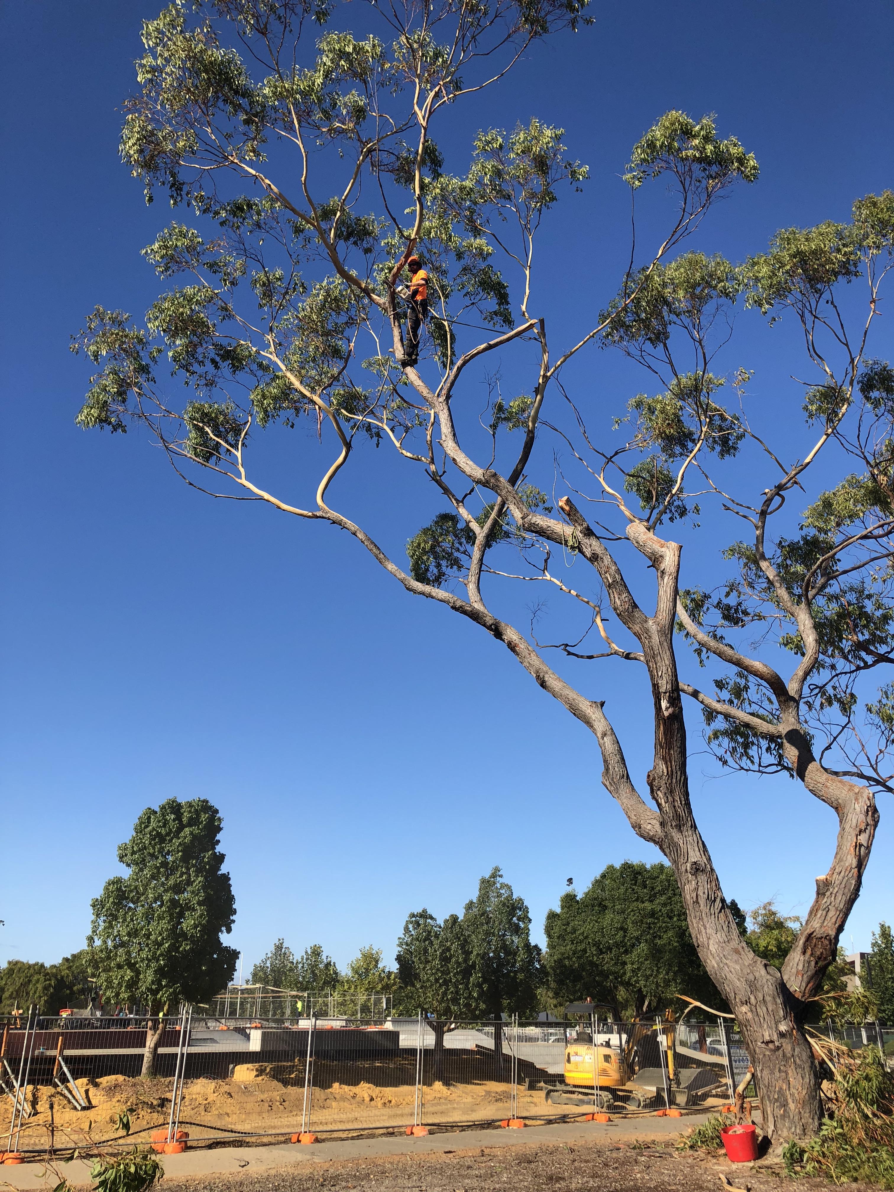 Skate park trees