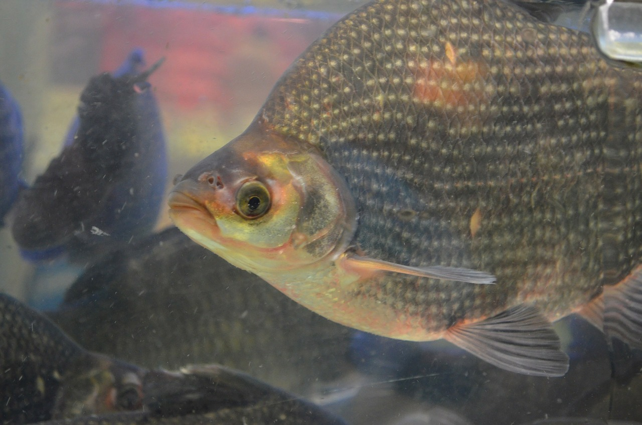 Register now - Tilapia Fishing Competition in Bowen! | Your