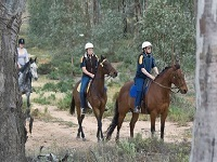 Horse riding wilderness trails4