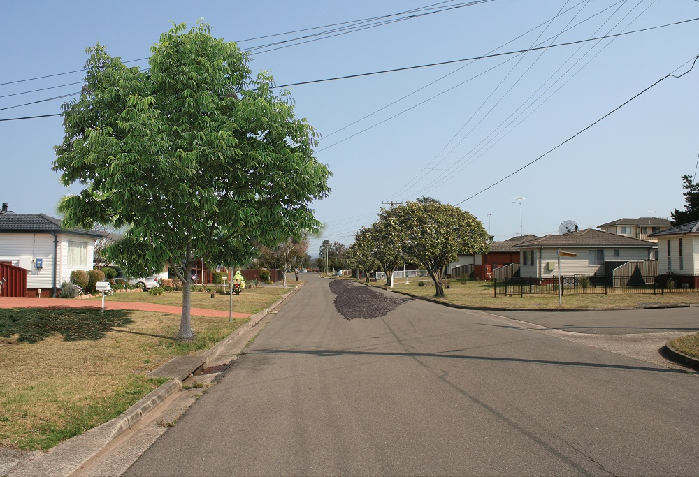 Existing street with visual representation of what it may look like with mature street trees.