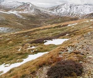 Kosciuszko national park alpine vegetation 128468
