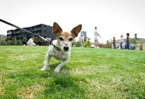 Surrey park dog cropped