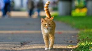Cat wandering again