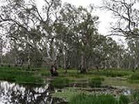 Yanga national park twin bridges wetland engage