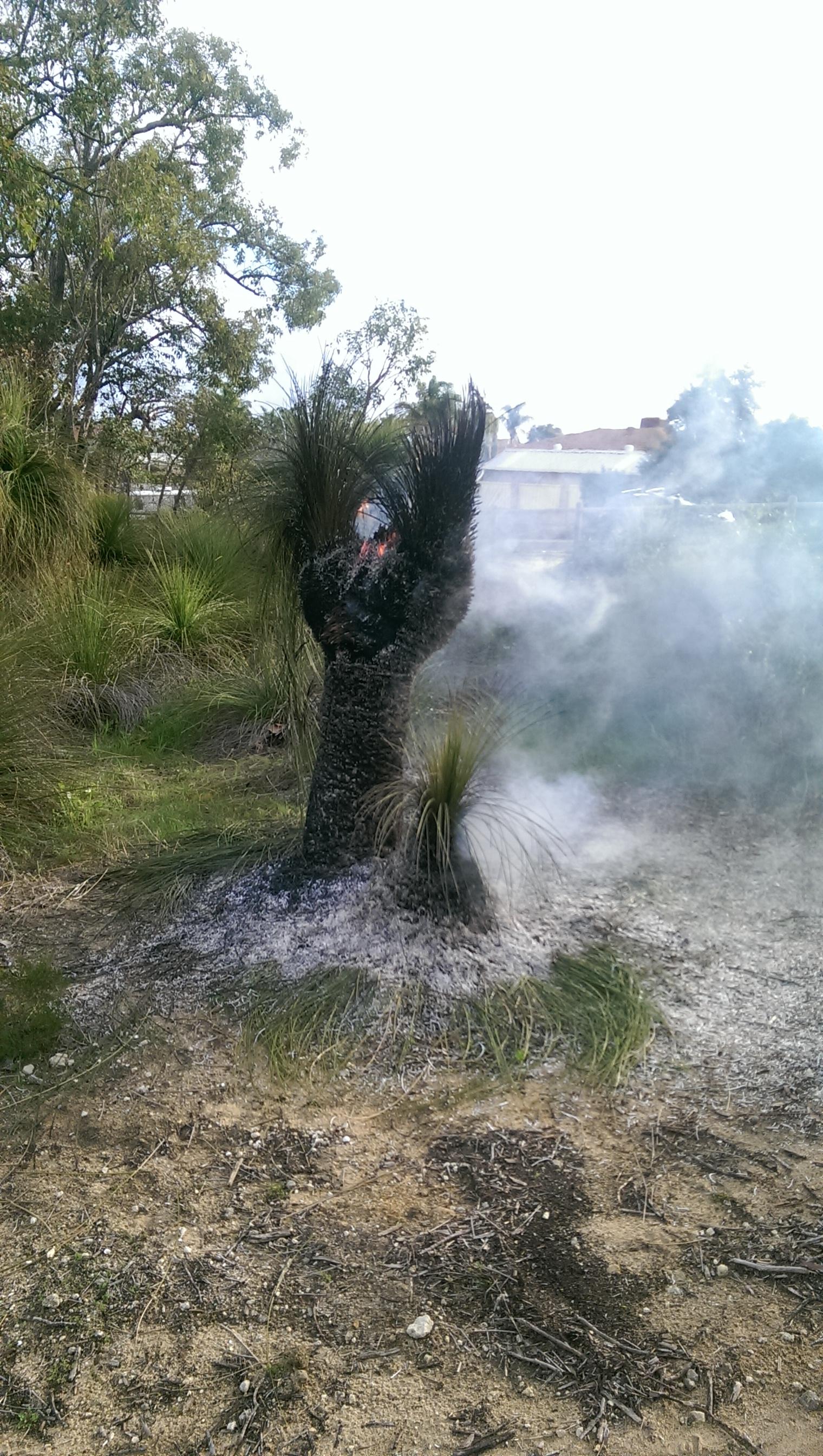 Grasstree on fire1