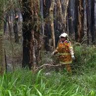 Bushland fire