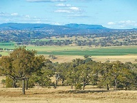 Biodiversity native vegetation dubbo 1360800 resized