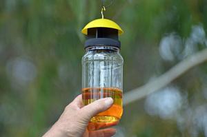 Wasp trap 1