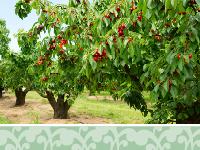 Ehq topics 200x150 vegetation planting 1