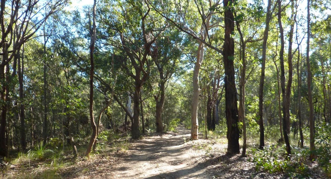 Buttaba forest image