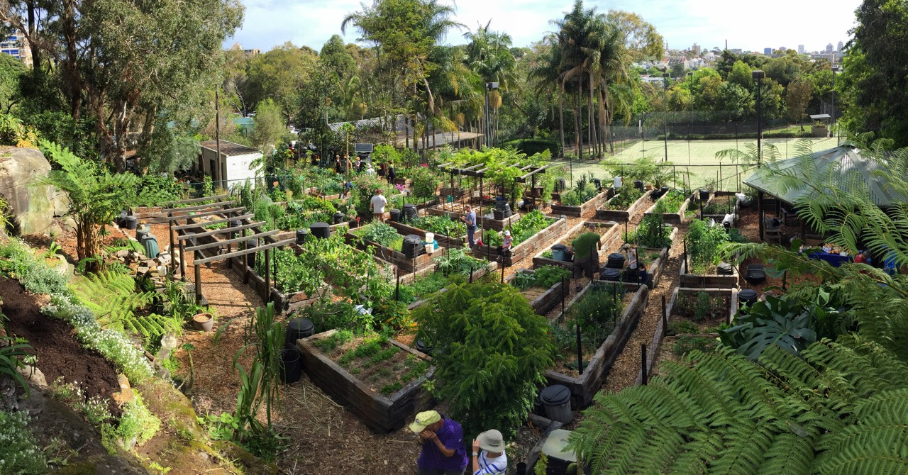 Paddington Community Garden: Renewal of User Agreement