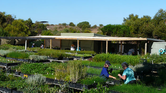 Hindmarsh_island_landcare_nursery_2014_photo_nicail_nicol