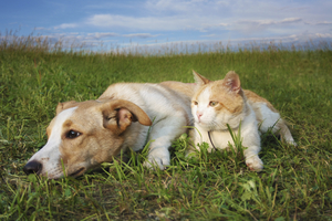 Dog and cat on grass