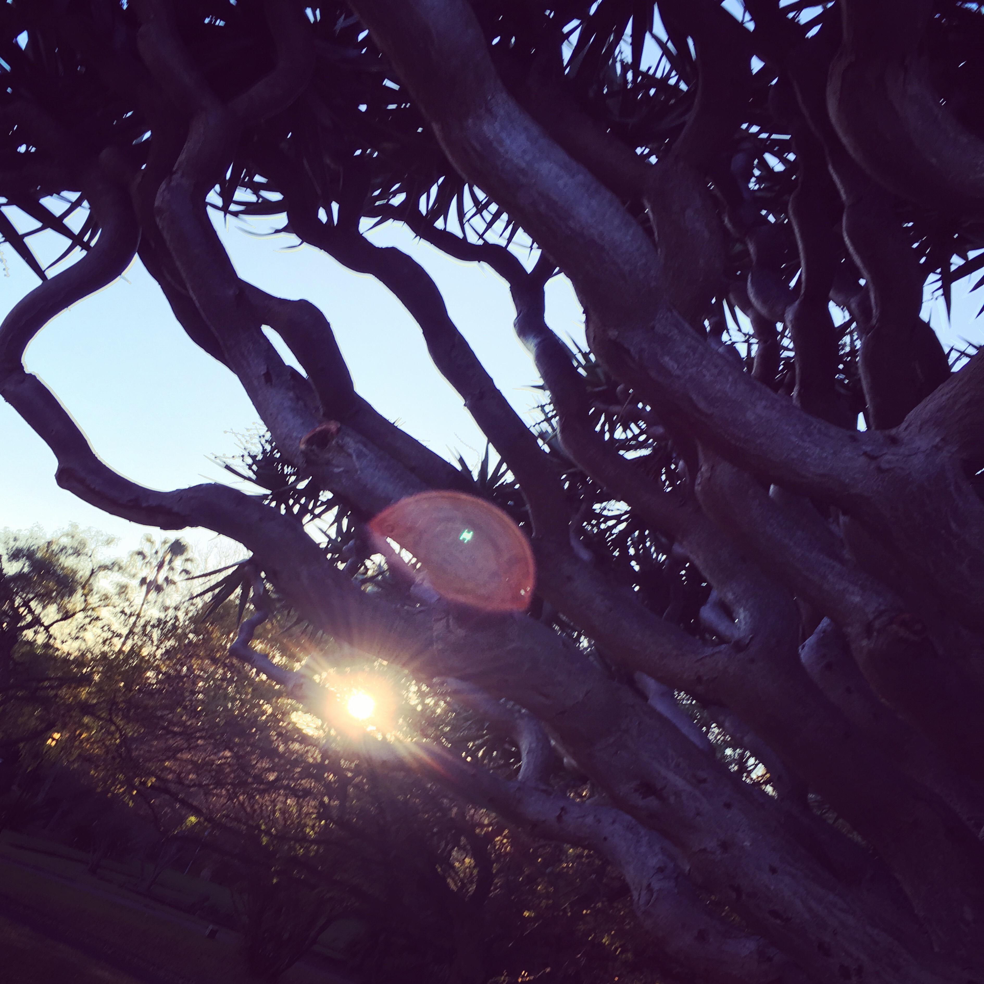 Trees in callum park