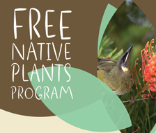 Free native plants program