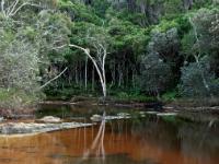 Bongil bongil national park