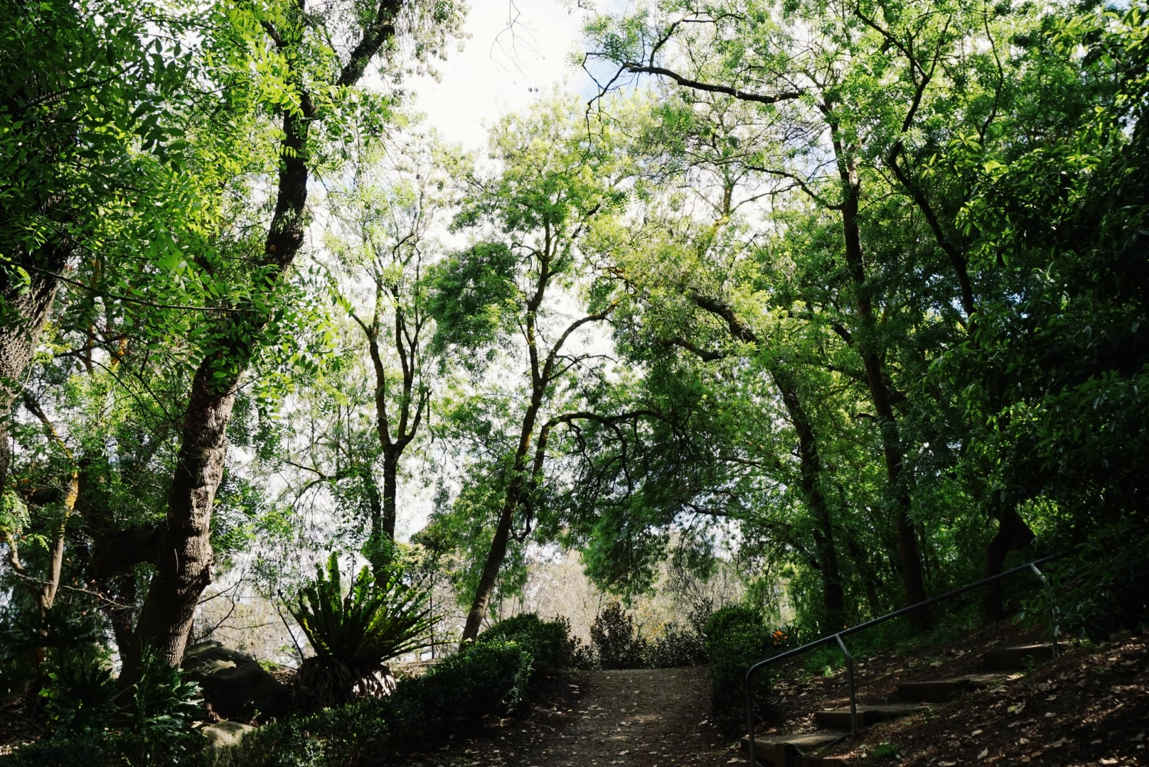 Trees at Wilson's Botanic Garden