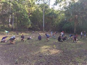 Burleigh ridge park koala tree planting large image size %285%29