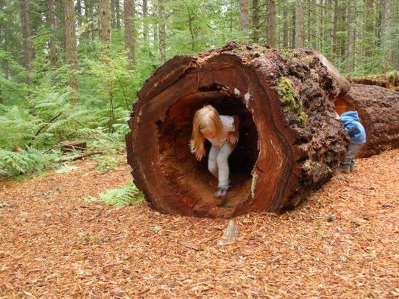 Log Tunnel