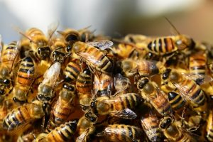 Bees & Wasps Infestation Perth