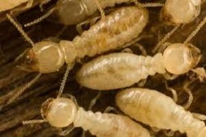 Busselton Pest Control - Termites, Rodents & More