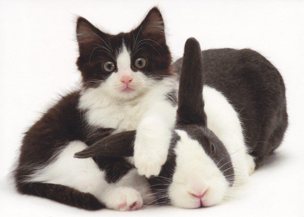 rabbit and cat having fun