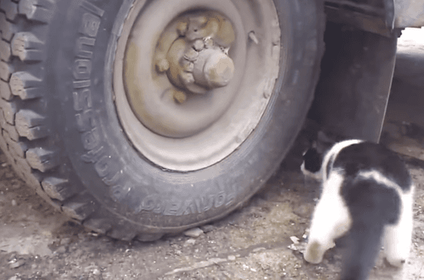 mouse in a wheel
