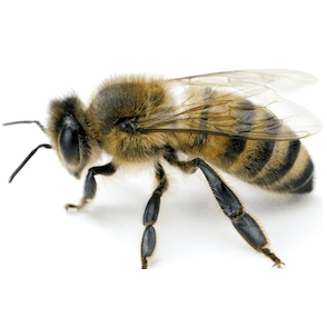bee and wasp treatment and control