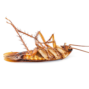 cockroach treatments and removal