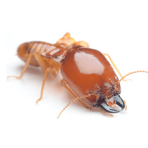 termite treatment and removal