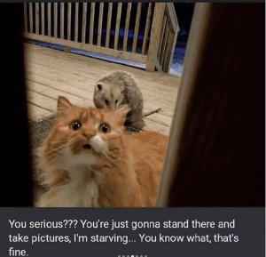 possum eats cats food