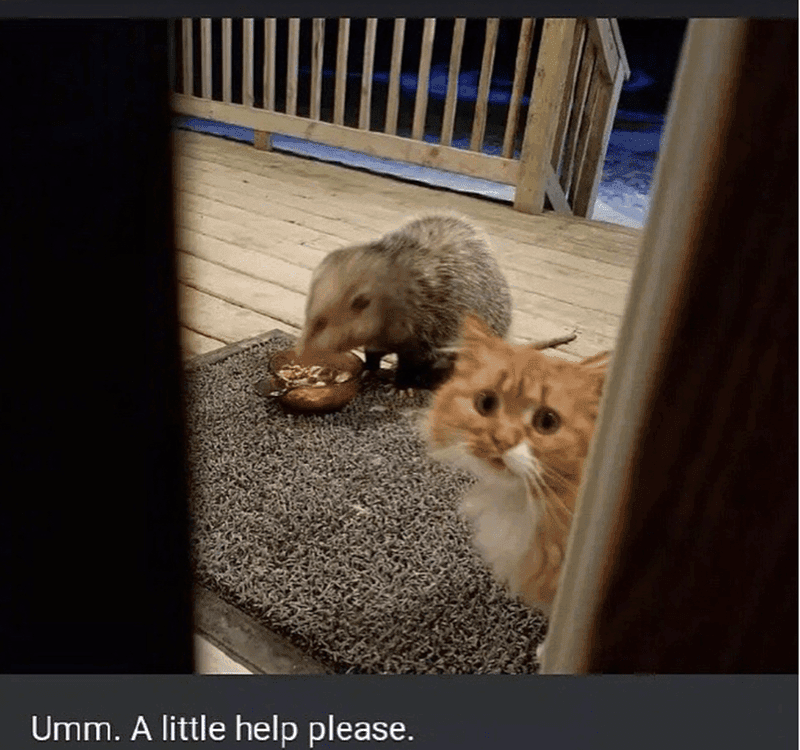 possum and cat