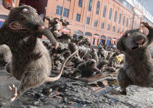 mutant rat control in Adelaide