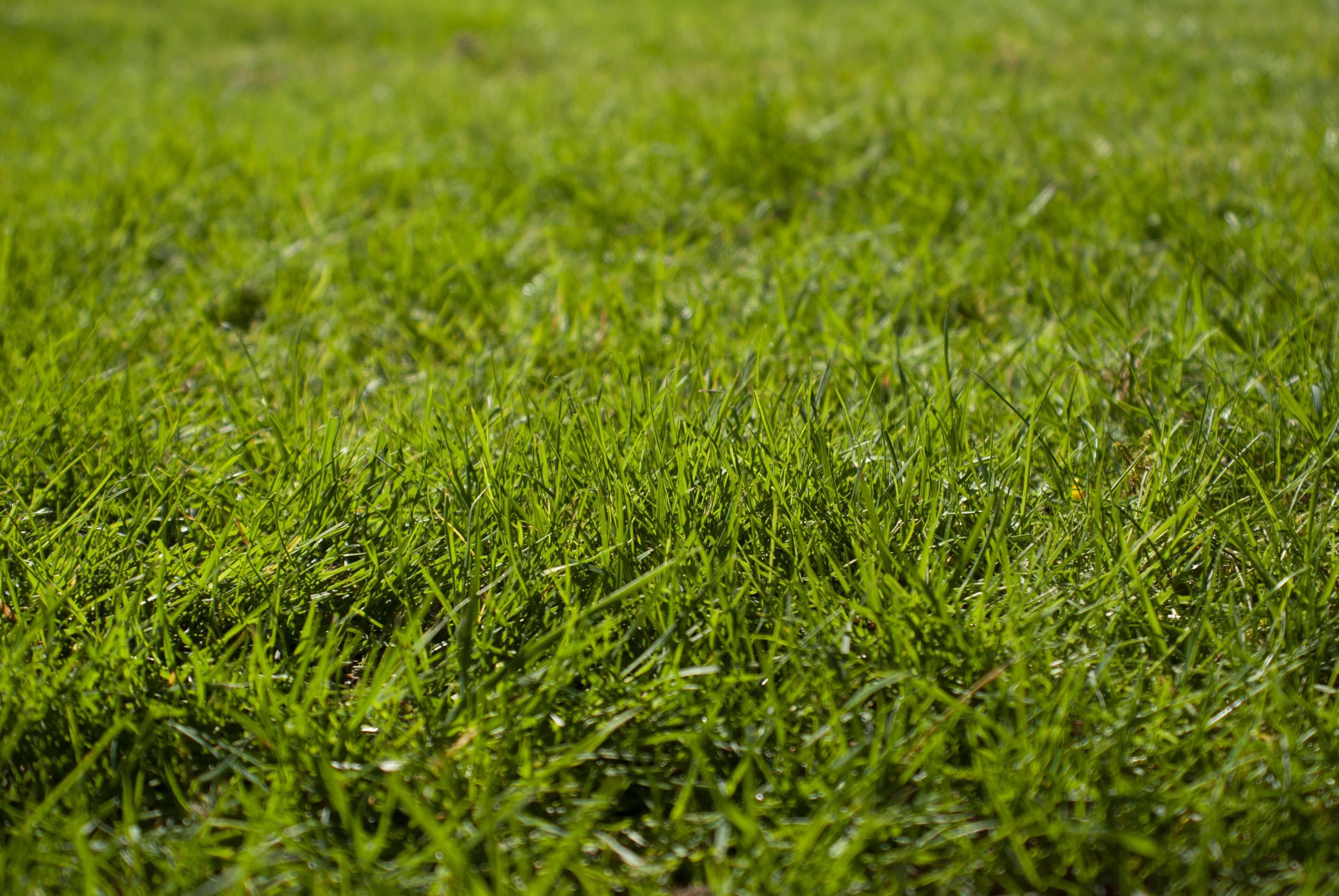 Oakmont Grass 4