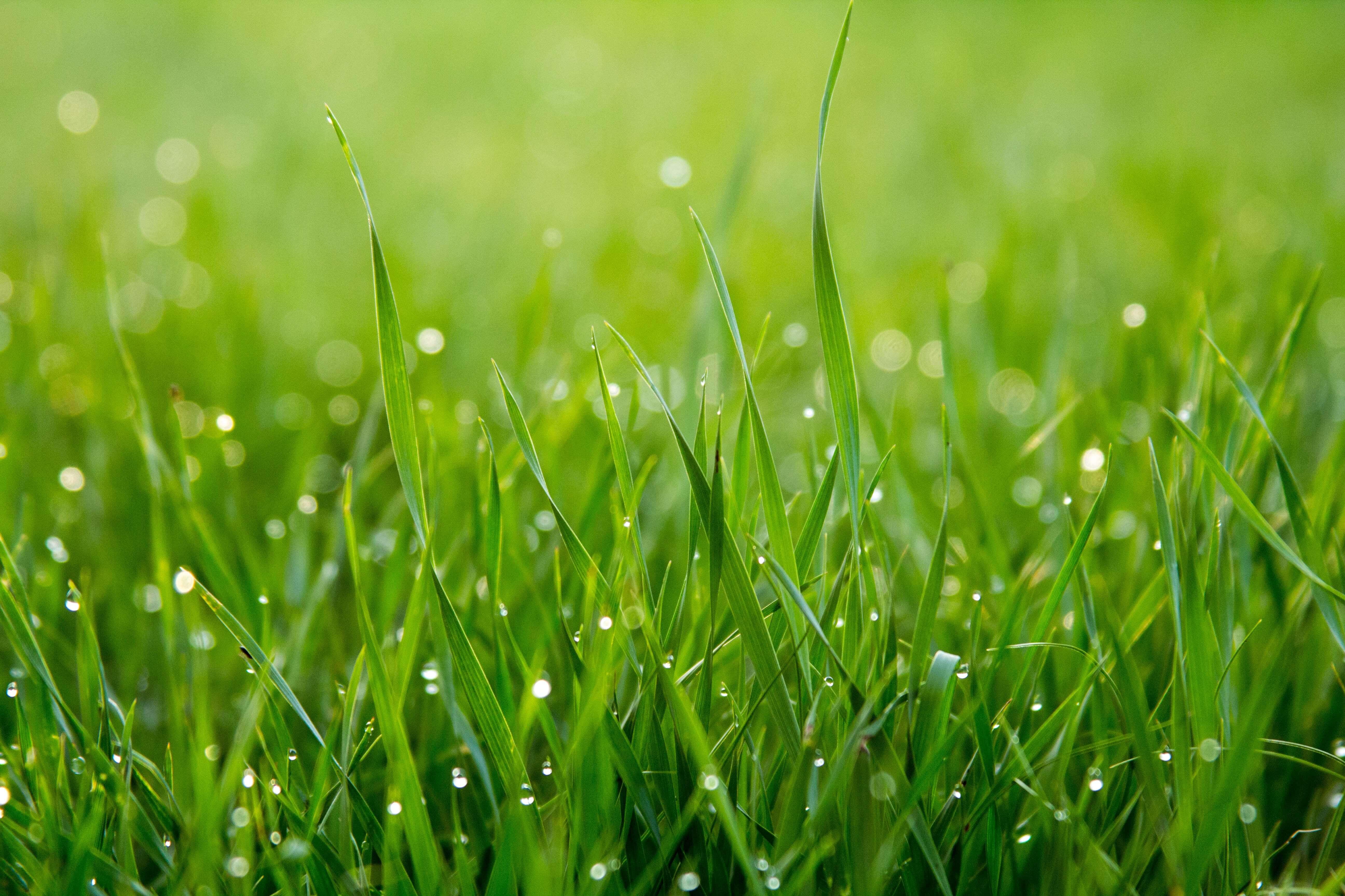 Oakmont Grass 1
