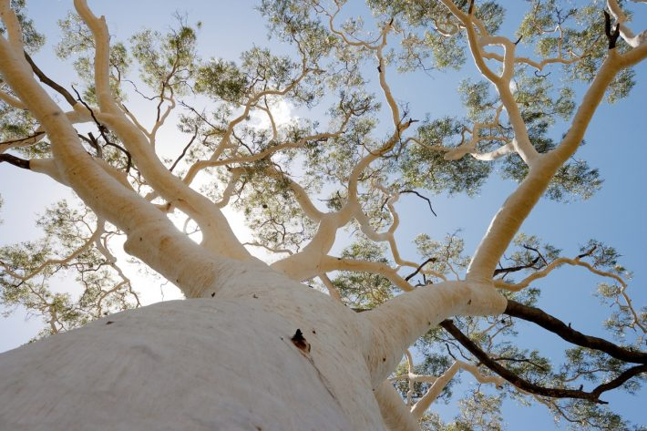 Significant-Tree-iStock-106396735-710x473