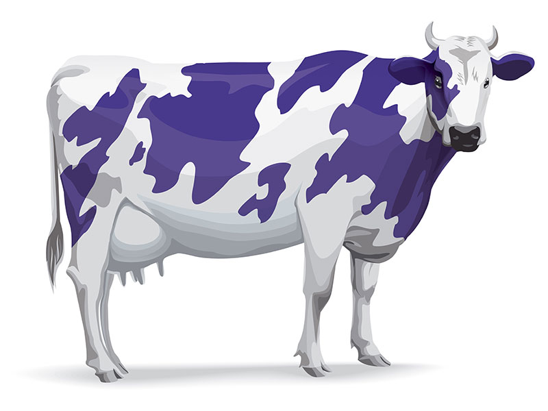 Photo of Purplebricks and Purple Cows