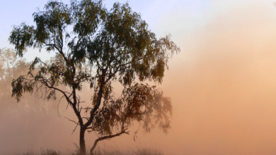 Photo of REA Group joins the global support of Australia's bushfire relief efforts