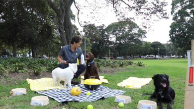 Photo of Ray White plans pawsome day to connect with community