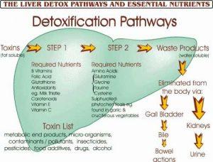 liver-detox-pathways