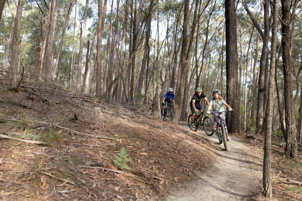 Bundadung Trail Network in Tathra
