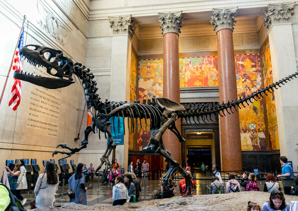 New York Natural History Museum