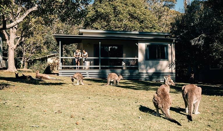 Kangaroos eating outside a cabin, two people on balcony