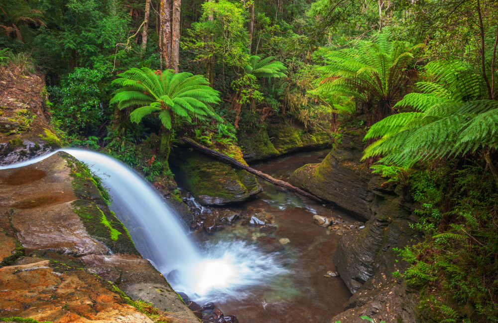 Liffey Falls near Launceston Tasmania