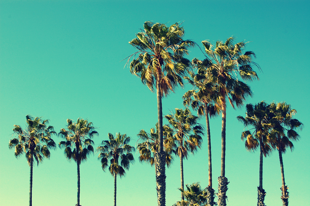 Santa Monica is the LA you've been looking for