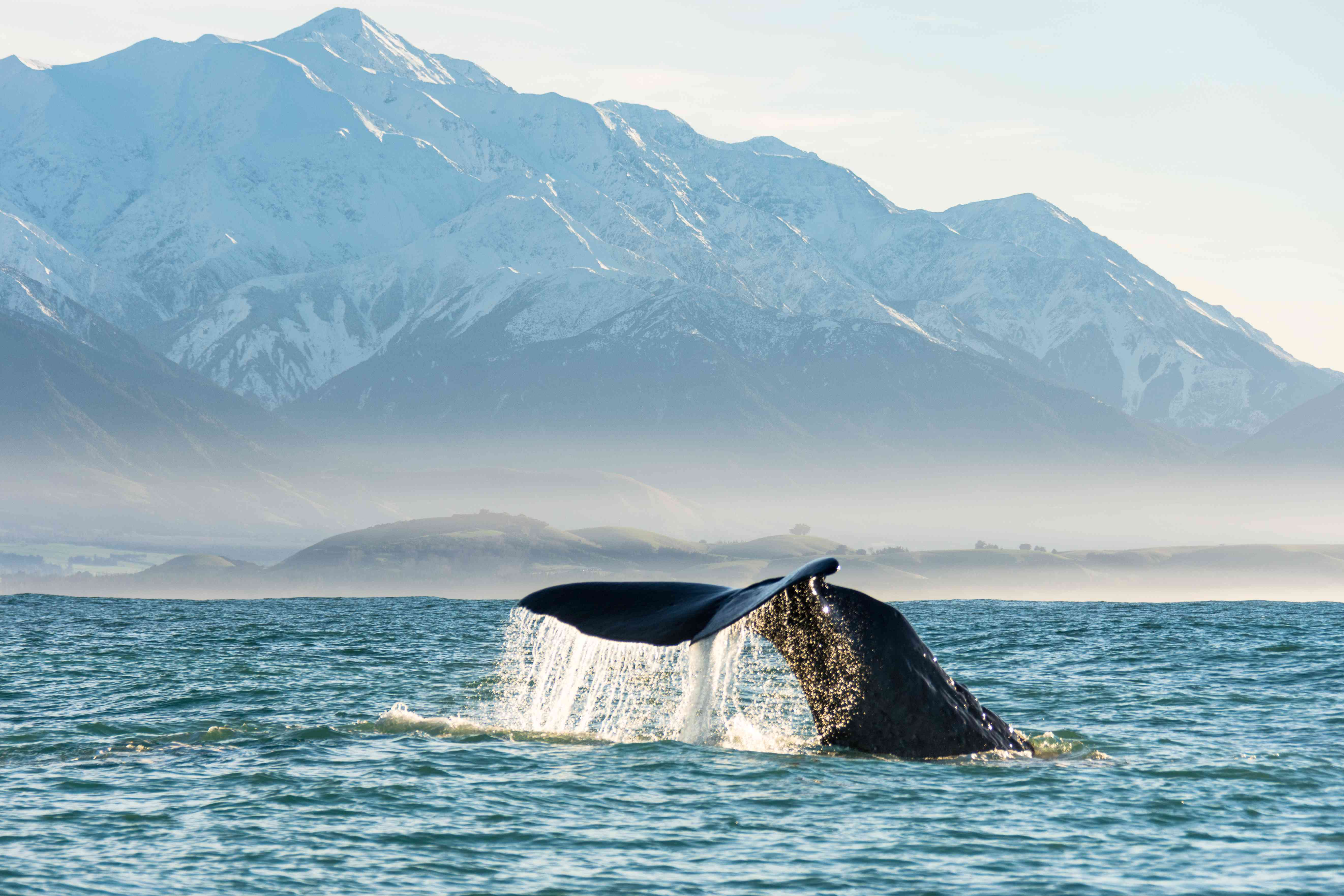 Try whale watching in New Zealand