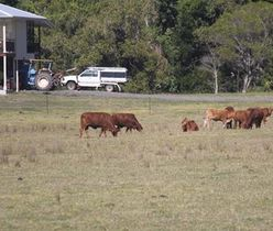 Cattle_Farm_812.jpg