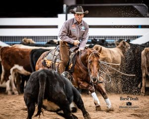 Corey Holden and 'One Wild Cat' score 211pts in the Open Classic Challenge